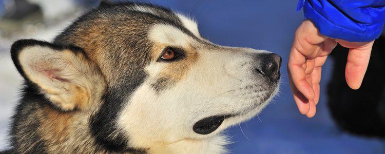 Un perro percibe como buen olor cosas diferentes al ser humano