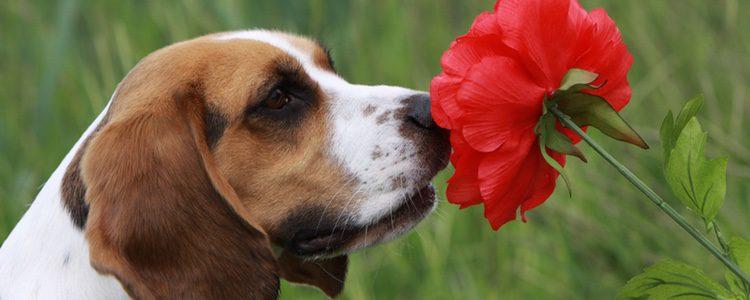 A tu perro le parece mejor que no lleves ningún perfume