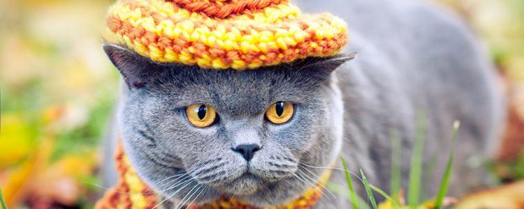 Existen disfraces diseñados exclusivamente para gatos