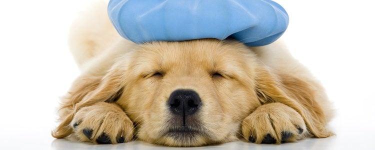 El primer síntoma para saber si tu perro está malo es la falta de apetito