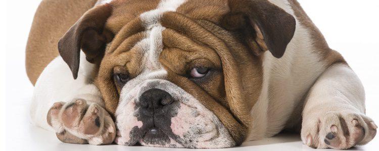 El aliento de tu mascota siempre debe estar fresco