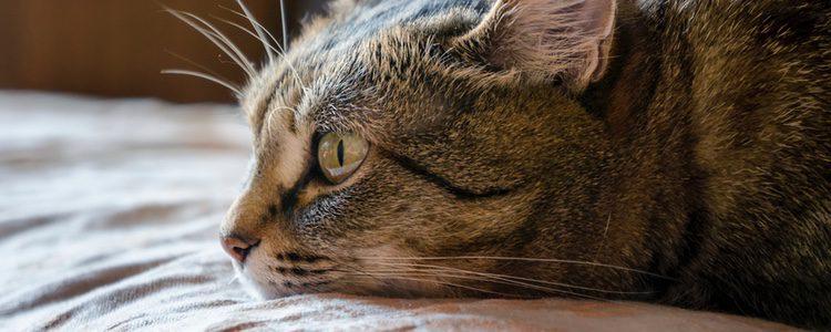 Es importante que tu gato se sienta cómodo con la arena que use