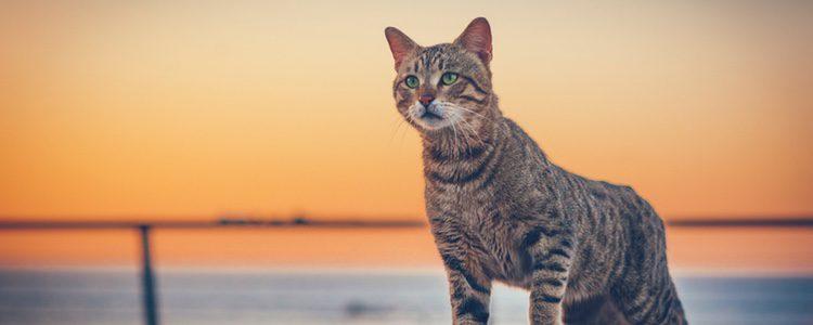 Muchas personas que buscan gatos que suelten poco pelo