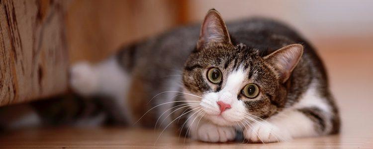 Deberás darle a tu gato todos los cuidados que necesite