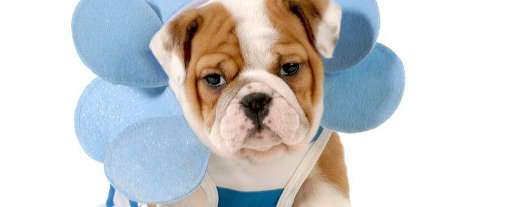 Nuestro canino puede sentirse con un disfraz o bien agobiado o ridiculizado