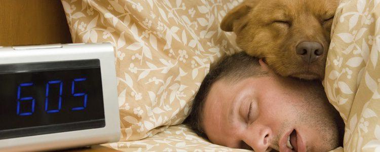 Un perro en edad adulta duerme entre las 13 y 16 horas