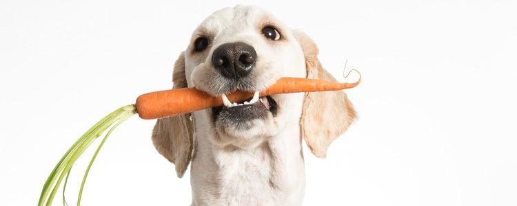 No debemos dar a nuestro perro todo aquello que comamos nosotros