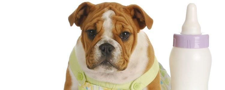 Se debe controlar el peso del cachorro en casa