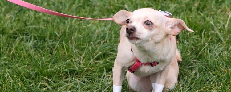 Los ojos, el hocico y la postura también nos puede ayudar a saber cómo se siente nuestro perro