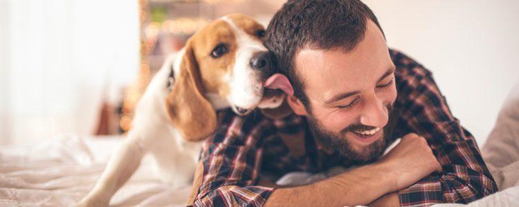 Los perros mueven la cola también para comunicarse con sus dueños