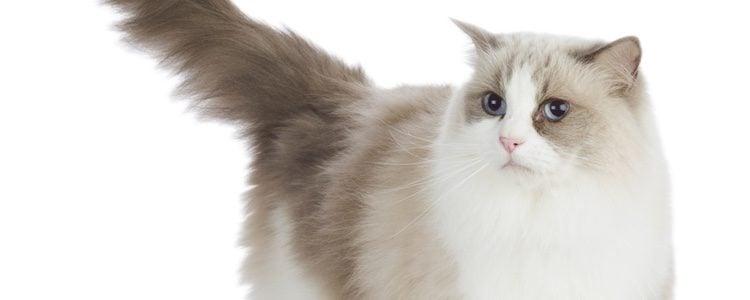 Los gatos son mucho más territoriales que los perros