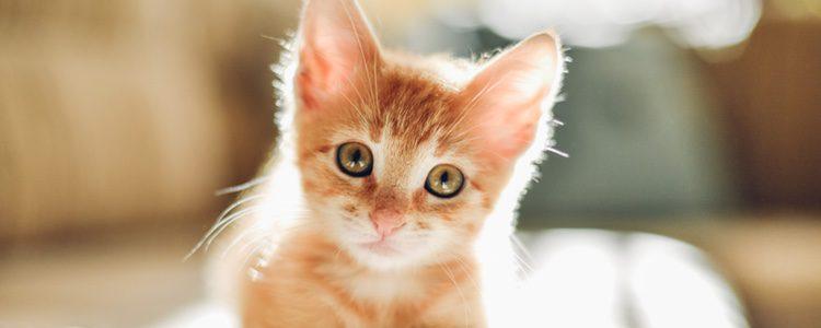 Para combatirlo el veterinario sabrá cuál es el procedimiento o tratamiento adecuado