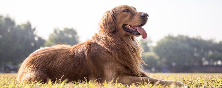 Sea cual sea el tamaño de tu perro nunca debes plantearte abandonarlo