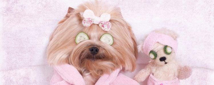 Los perros de pelo largo deben tener una higiene muy cuidada