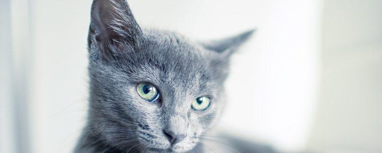 La pasta que debemos usar desde ser específica para felinos