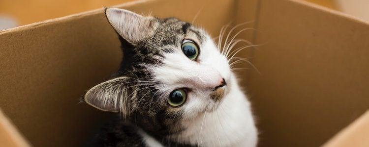 Tu gato te dará pista de cuando va a llegar su momento
