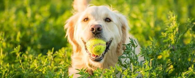 Hay que aprovechar la juventud del perro para que aprenda ciertas conductas