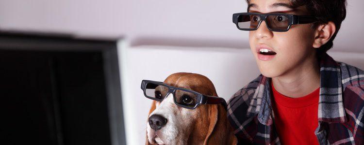 Las películas protagonizadas por perros están cargadas de sentimientos