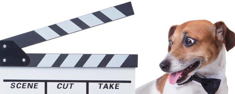 La película Beethoven contaba las alocadas aventuras de un perro