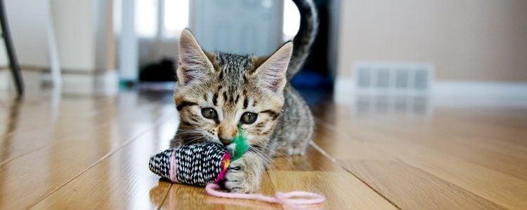Los objetos colgados por hilos son un gran reclamo para los gatos