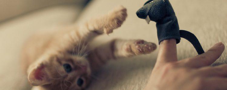Los ratones son la principal presa de los gatos y, en consecuencia, un gran reclamo para ellos