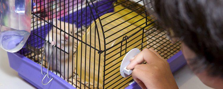 Las jaulas deben ser amplias para que el hámster pueda correr y tener su nido