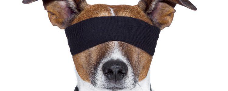 La vista es otro de los signos claros de envejecimiento en un perro