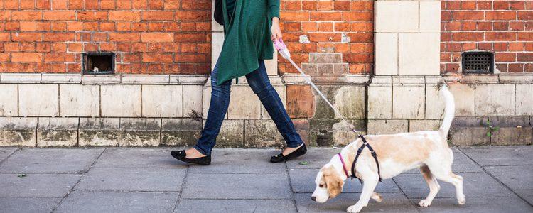 Puede que a tu mascota le asuste pasear por la calle por algún problema que haya tenido anteriormente