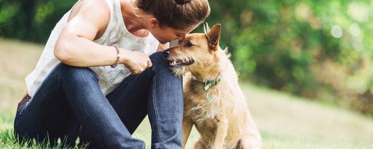 Los perros suelen sentirse mejor cuando están en espacios abiertos como el campo