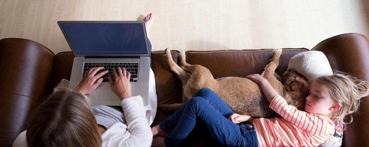 Si quieres que tu perro descanse en el sofá puedes comprarle uno específico para él