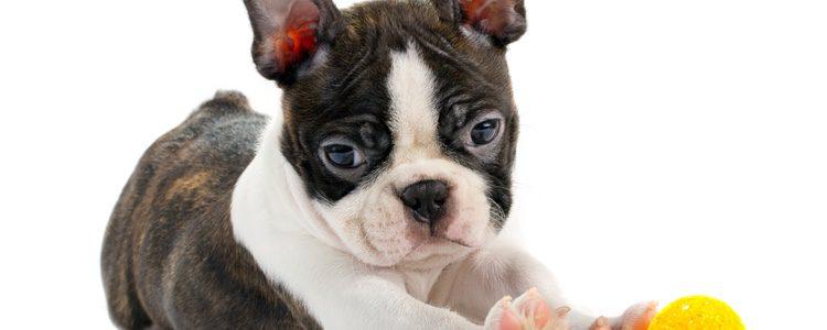 Son muchos los juegos que se pueden emplear para motivar a tu perro