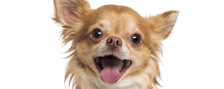 Se pueden utilizar juegos para potenciar el olfato de los perros