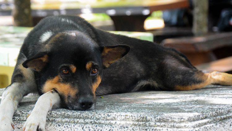 Las alergias alimentarias en los perros son mucho más comunes de lo que pensamos