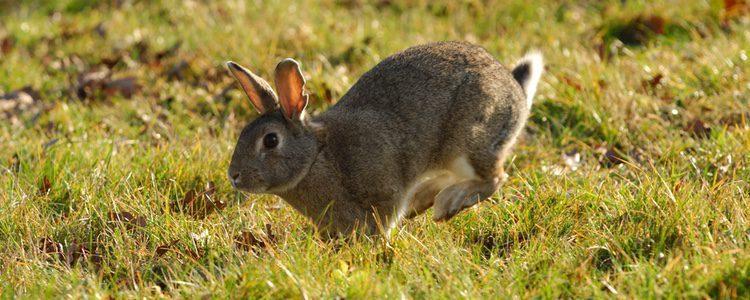 Existen diferentes señales para saber si tu conejo padece de estrés