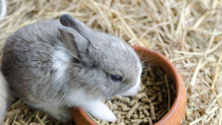 Los conejos son unos animales muy propensos a sufrir estrés