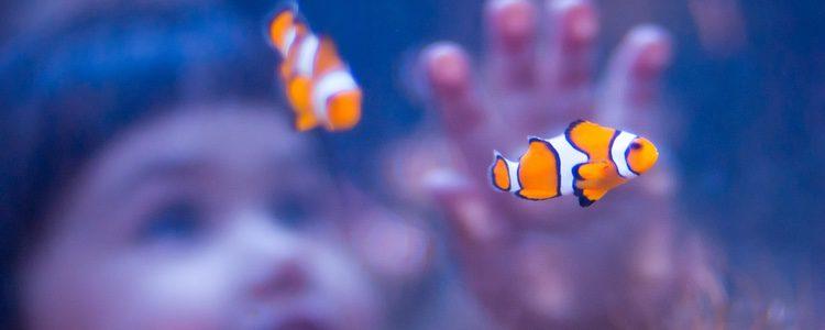 Debes encontrar los peces con los que te sientas más identificado