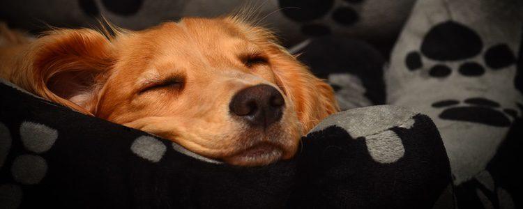 Si acostumbramos a nuestra mascota a dormir en la habitación de mayor se subirá a la cama