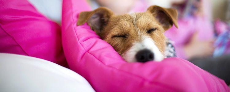 Antes de adoptar un perro es necesario saber en qué estancia de la casa se alojará