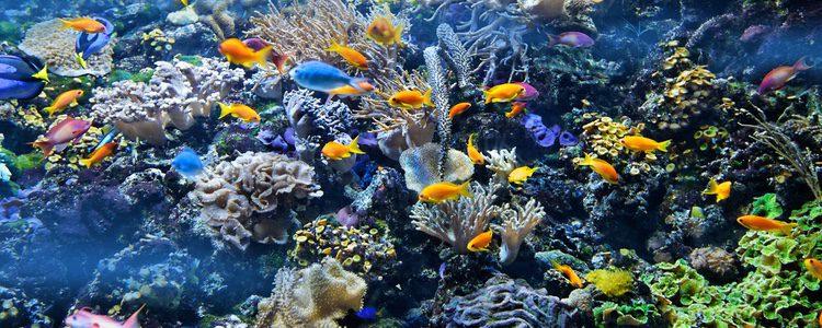 Tienes que evitar que se cuelen organismos dañinos al agua del acuario