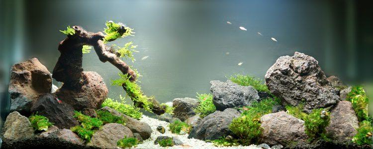 Si el acuario tiene algas y el agua tiene una tonalidad verdoa hay que desinfectarlo