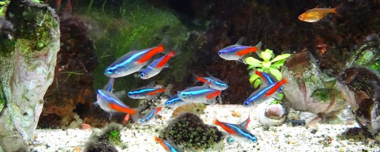 Los acuarios siempre han de contener la temperatura adecuada para mantener a salvo a los peces