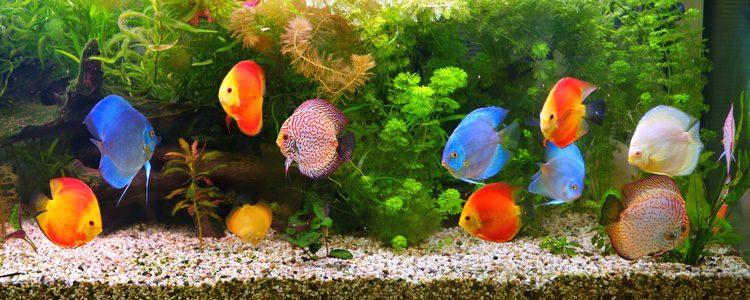 Limpieza del acuario consejos b sicos bekia mascotas - Peceras pequenas decoradas ...