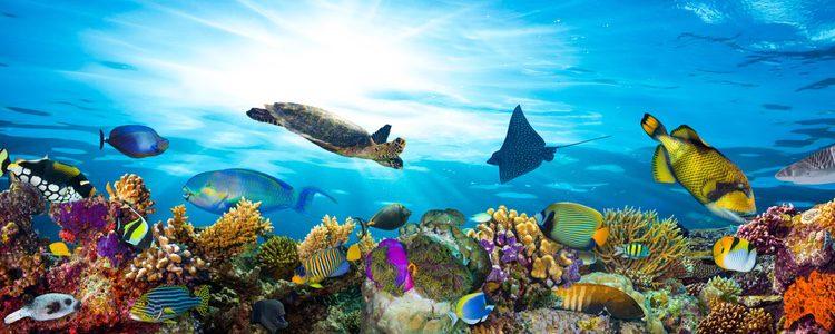 Es fundamental que el acuario de nuestras mascotas esté limpio
