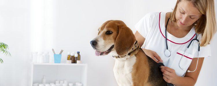 Las vacunas son importantes para tu mascotas y para los demás animales que conviven con ellos