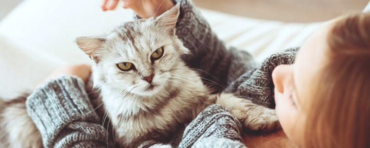 Debemos asegurarnos de darle un cuidado adecuado a nuestro gato y de que se sienta a gusto con nosotros