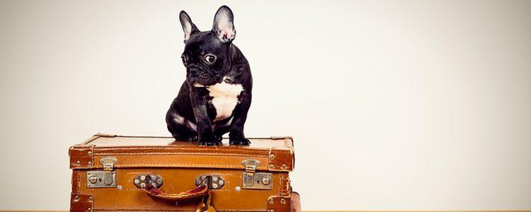 Al viajar con tu mascota al extranjero tienes que tener en cuenta diversos requisitos