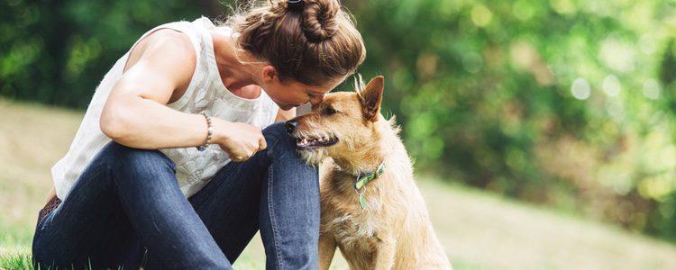 Un paseo con nuestro perro puede ayudar a coger una mayor confianza y complicidad