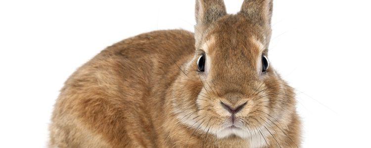Es muy importante que conozcas todos los detalles sobre como cuidar a un conejo