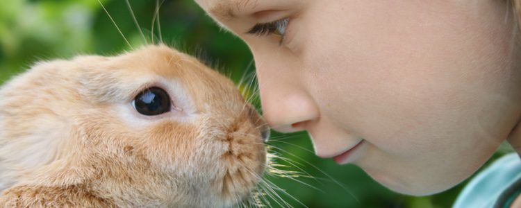 Hay numerosas razas de conejo que tener como mascota