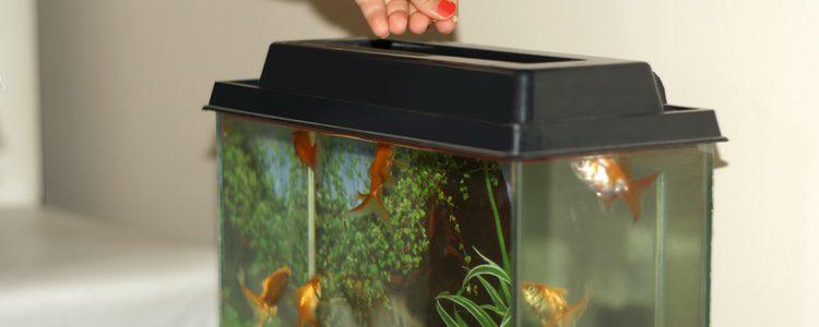 Hay que tener en cuenta diferentes aspectos al tener un acuario, ya que requiere una serie de cuidados